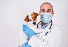 veterinarian-covid-pandemic