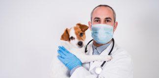 veterinarian-covid-pandemic